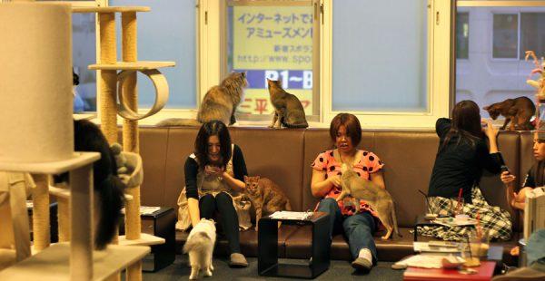 Japonlar Hakkında En İlginç 10 ŞEY