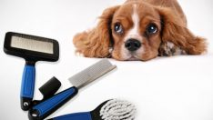 Köpek Bakım Ürünleri