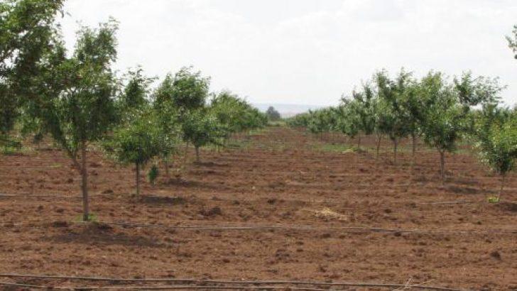 Özel Ağaçlandırma Nasıl Yapılır?